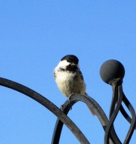 birds june 1