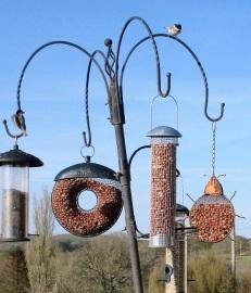 birds june