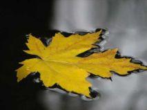 10. leaf