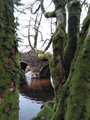 21. Dartmoor