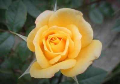 0 yellow