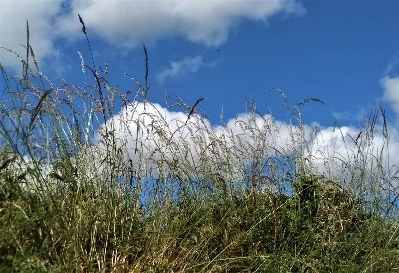 3.1 grasses 2