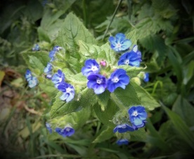 5 flowers - close up 2