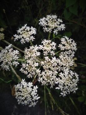 5flowers - close up 1