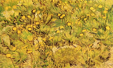 A Field of Yellow Flowers Van Gogh